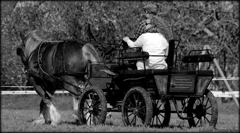 Champeaux-Ferme-Equestre-des-Courlis–1-