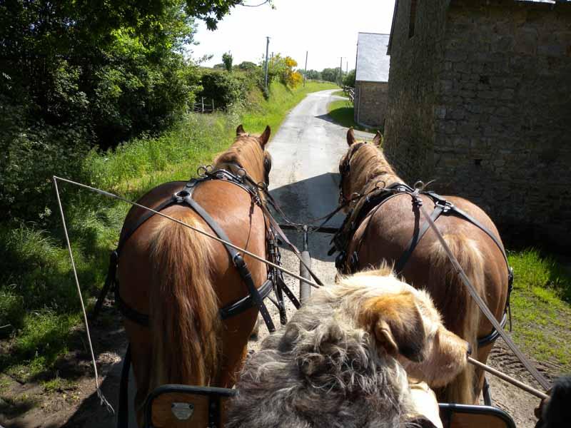 Champeaux-Ferme-Equestre-des-Courlis–5-
