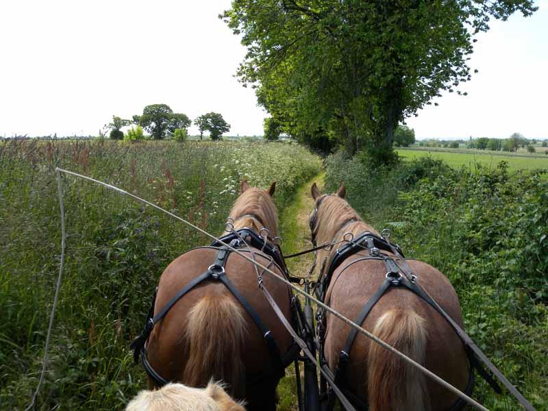 Champeaux-Ferme-Equestre-des-Courlis–6-