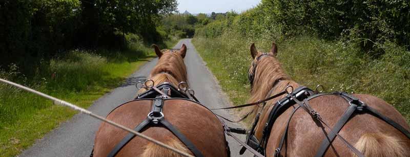 Champeaux-Ferme-Equestre-des-Courlis–7-