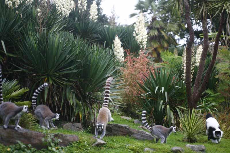 Champrepus-Parc-zoologique-et-paysager-la-reserve-des-lemuriens-Y.Lebreton