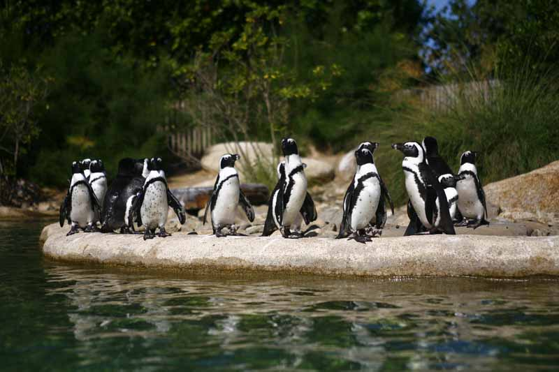 Champrepus-Parc-zoologique-et-paysager-manchots-Y.Lebreton
