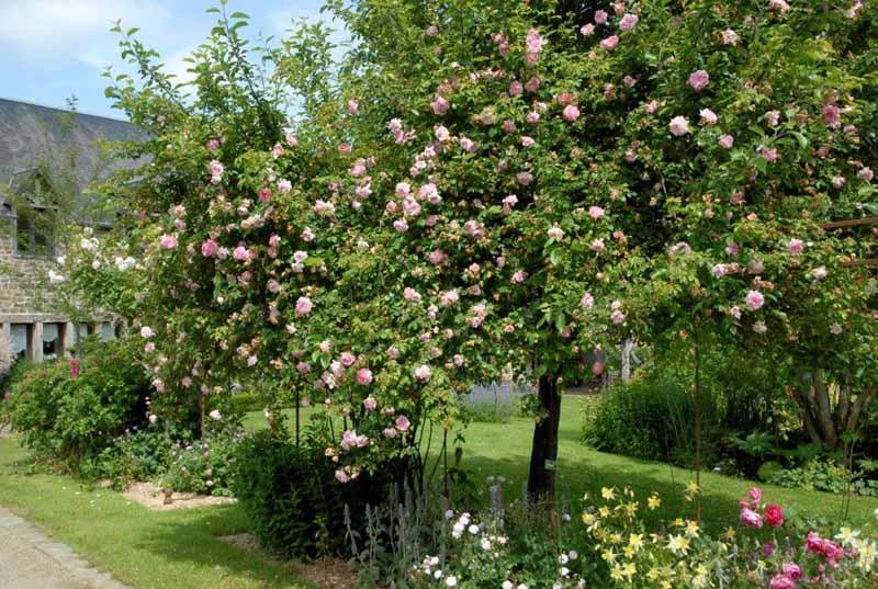 Isigny-le-Buat-Jardin-Les-Fleurs-du-Cassel