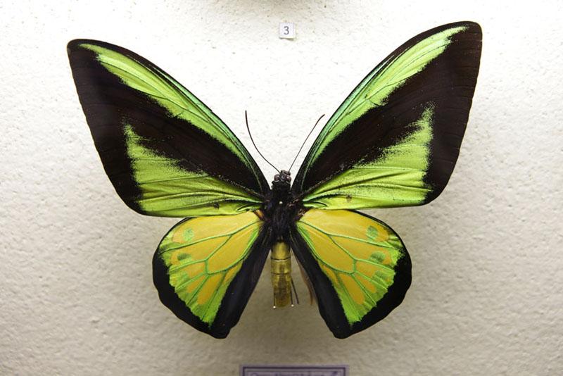 Jardin-des-papillons
