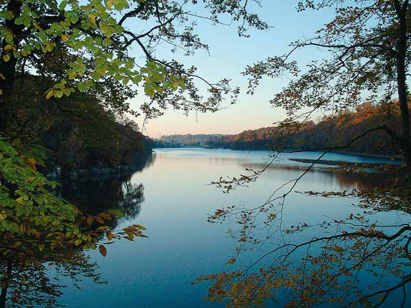 Le-Bois-d-Ardennes—Ducey