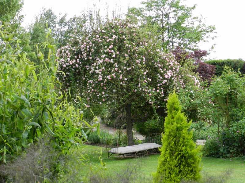 Le-Jardin-du-Cassel-a-Isigny-le-Buat-2-TIS