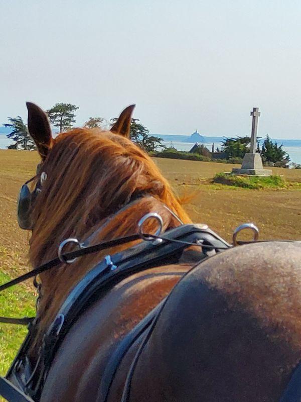 champeaux-ferme-equestre-des-courlis-13
