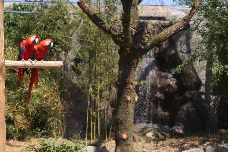 champrepus-zoo-ara-macao-3