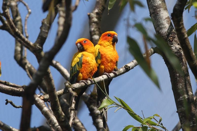 champrepus-zoo-perruche-soleil