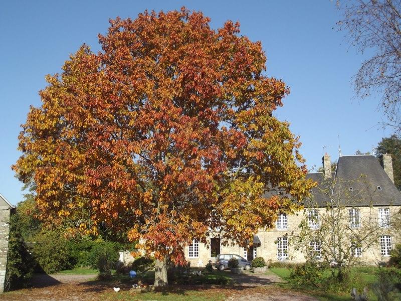 saint-cyr-du-bailleul-meuble-rochard-8